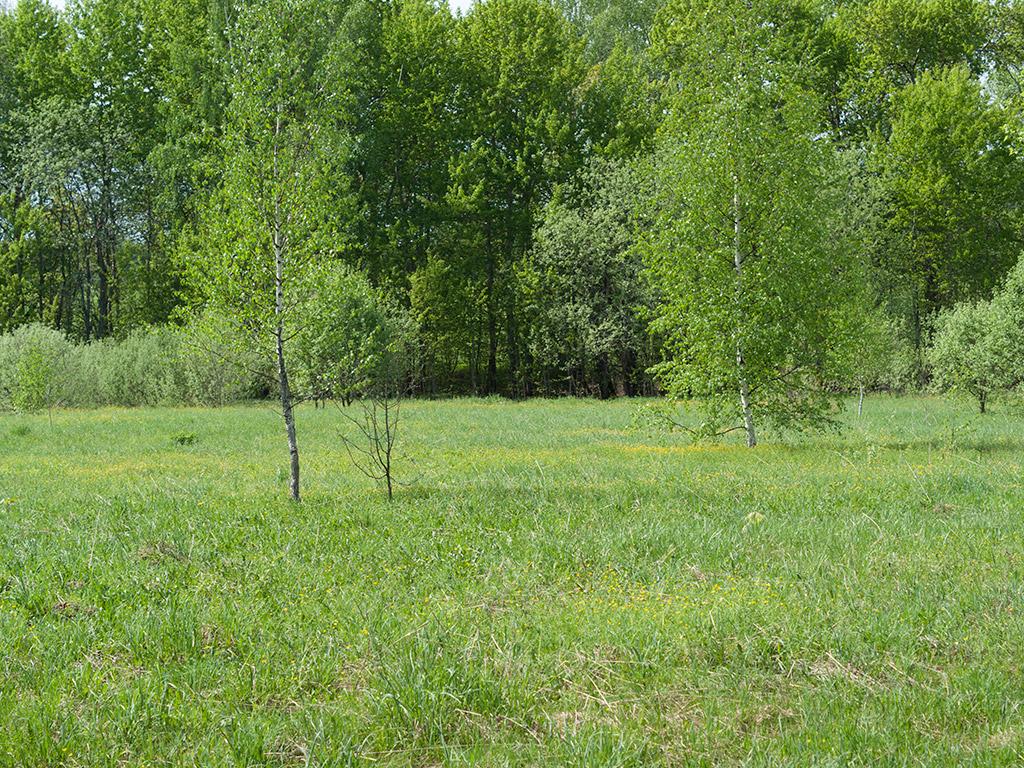 фото лесная поляна