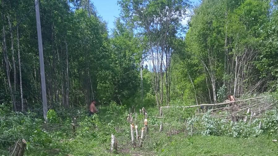 В КП «Лесная поляна» продолжаются работы по вырубке деревьев на 1 и 2 улице